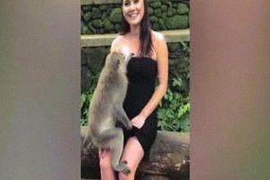 Khỉ ma mãnh kéo váy để lộ ngực nữ du khách ở Indonesia
