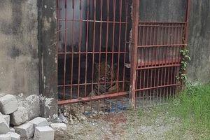 Vụ hổ cắn lìa tay người ở Bình Dương: Đề nghị thu hồi giấy phép nuôi hổ