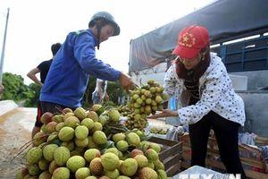 Xuất khẩu trên 13.000 tấn vải quả tươi qua cửa khẩu Tân Thanh