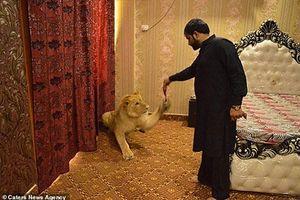 Sư tử được đại gia nuôi như con đẻ, sống sang chảnh
