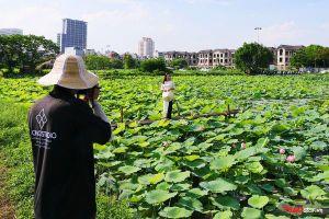 Thiếu nữ lưng trần say sưa tạo dáng cùng hoa sen dưới nắng nóng 40 độ ở Hà Nội