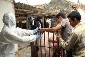Trích ngân sách trung ương hỗ trợ địa phương chống dịch tả lợn châu Phi