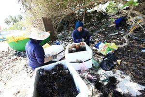 Lý Sơn: Mộ gió, Âm linh tự và 'thiên đường du lịch mới' ở Việt Nam