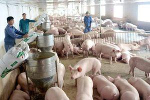 NN ĐBSH: Hải Dương khống chế thành công 10 ổ dịch tả lợn châu Phi