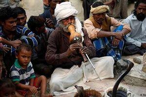 Tổ chức Y tế thế giới hành động khẩn cấp để giảm số người chết vì rắn cắn
