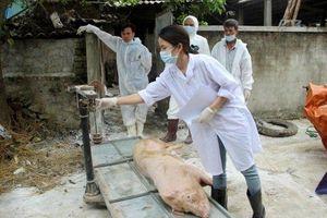 Nghệ An thành lập các đội thanh niên tình nguyện phòng, chống dịch tả lợn châu Phi