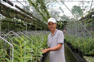 Lạc vào trang trại phong lan tiền tỷ giữa vùng cà phê Lâm Đồng