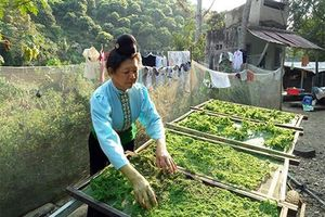 Rêu xanh - Âm thực độc đáo của đồng bào Thái Sông Mã