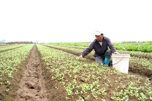 Phối hợp xây dựng chuỗi giá trị nông sản