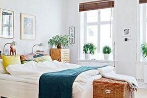 Phòng ngủ nhất định phải có loại cây này để phúc lớn tiền nhiều
