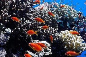 Trước biến đổi khí hậu, Israel và một số nước Arab cùng bắt tay bảo vệ san hô tại Biển Đỏ