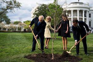 Dù được Tổng thống Trump và Macron vun đắp, cây sồi hữu nghị Mỹ-Pháp đã chết