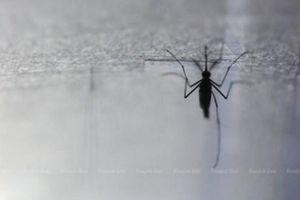 Thái Lan tích cực kiểm soát dịch 'sốt khom lưng' lây truyền qua muỗi
