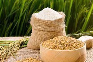 Xuất khẩu gạo vẫn giảm mạnh trong 5 tháng đầu năm