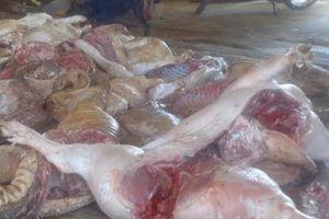 Đồng Nai bắt quả tang một cơ sở giết mổ hơn 1,4 tấn lợn chết