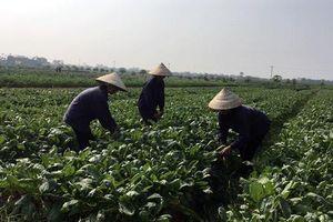 Khơi thông dòng vốn cho doanh nghiệp đầu tư vào nông nghiệp