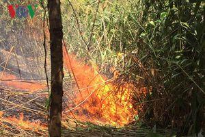 Hàng trăm người vượt núi dập tắt đám cháy rừng giữa trời nắng nóng