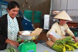 Thu nhập cao từ trồng rau hữu cơ