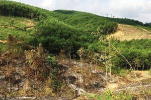 Vụ lập hồ sơ khống tại Ban QL rừng phòng hộ huyện Yên Thành: Khởi tố thêm 5 bị can