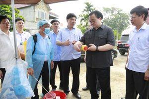 Bí thư Thành ủy Hoàng Trung Hải: Không được buông xuôi trong phòng chống dịch tả lợn châu Phi