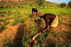 Thảm sát ở Mali: Hậu quả khủng khiếp của xung đột sắc tộc
