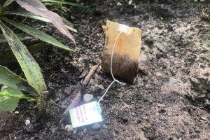 Chôn túi trà đã sử dụng vào trong vườn của bạn và bạn sẽ thấy điều kinh ngạc xảy ra