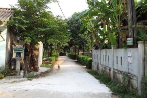 Xuất hiện thêm nhiều ổ dịch tả lợn châu Phi tại Quảng Trị