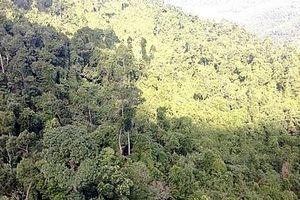 Dự án xin phá rừng xây biệt thự tại Quốc Oai: Ai đứng sau Công ty Hà Phú?