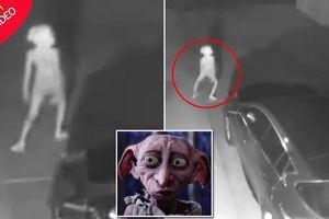 Clip: Sinh vật bí ẩn giống yêu tinh Dobby lọt vào camera giám sát trong đêm tối