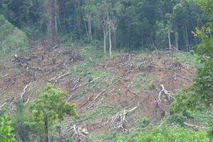 Khởi tố thêm 5 cán bộ, nhân viên ban quản lý rừng phòng hộ ở Nghệ An