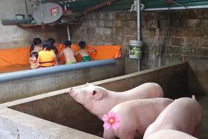 Không có công viên nước như ở thành phố, ông chú liền 'hô biến' chuồng lợn thành bể bơi cho các cháu vui chơi dịp hè