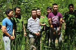 Bắt thêm một đối tượng vụ đầu độc hơn 10ha rừng thông ở Lâm Đồng
