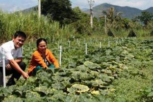 Nông dân Ninh Hòa an cư, lạc nghiệp nhờ vốn Agribank