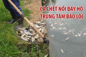 Cá chết bốc mùi hôi thối nổi đầy hồ trung tâm thành phố Bảo Lộc