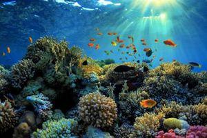 Cairns - điểm đến mới lạ cho du khách thăm Úc