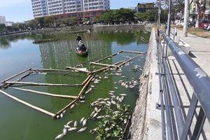 Cá chết trắng bụng tại hồ nước trung tâm thành phố