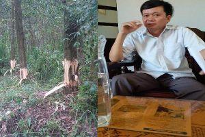 Bí thư, Chủ tịch xã bị tố dùng dao lột vỏ rừng keo của dân