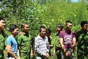 Vụ hạ độc chết hơn 10ha rừng thông ở Lâm Đồng: Khởi tố thêm 1 đối tượng