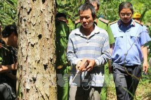 Lâm Đồng chỉ đạo khẩn trương làm rõ vụ phá rừng thông 50 năm tuổi