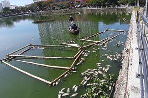 Cá chết nổi trắng hồ ở Đà Nẵng do nắng nóng kéo dài