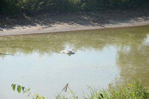 Nghệ An: Bơm nước kênh ô nhiễm làm nước sạch bán cho dân