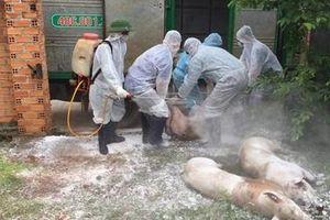 Các tỉnh Tây Nguyên triển khai nhiều biện pháp phòng, chống dịch tả lợn