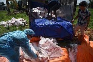 Sóc Trăng: Tiêu hủy gần 43 tấn thịt lợn