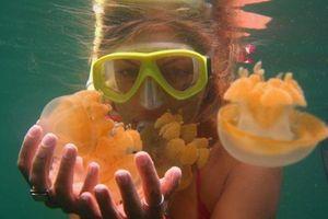 Ngâm mình dưới hồ nước chứa hơn 600.000 con sứa