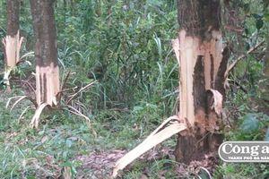 Vụ Bí thư kiêm Chủ tịch UBND xã bị 'tố' hủy hoại rừng trồng của dân: Yêu cầu đương sự tường trình