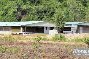 Trang trại chăn nuôi heo 'hành' dân