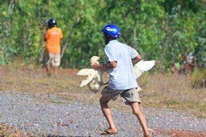 Vụ hôi vịt ở Quảng Bình: Tài xế phải đền 200 triệu đồng