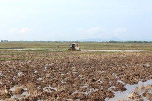 Chuyển mục đích sử dụng đất trồng lúa trên địa bàn 2 tỉnh Thái Nguyên và Quảng Ninh
