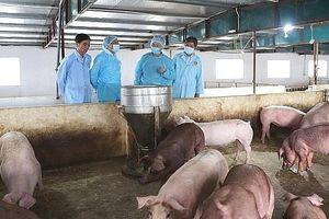 Hà Tĩnh: Huyện Lộc Hà bùng phát thêm 3 ổ dịch tả lợn châu Phi