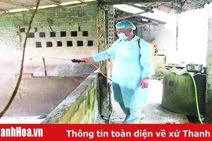 Tăng cường công tác chỉ đạo phòng chống, ngăn chặn bệnh dịch tả lợn châu Phi